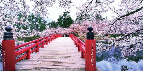 japonia travel collection agency sarbatoarea ciresilor infloriti