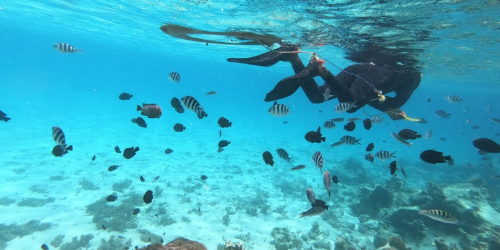 mnemba snorkeling tour trip travelcollection.to