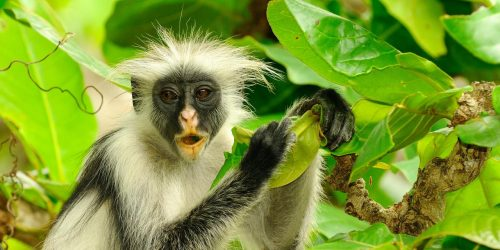 oferta zanzibar circuit travel collection agentie de turism oferte exotice